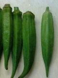 オクラ収穫