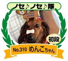 2008.10.10 ドッグカウンセラー猫娘さんノセノセ隊初段
