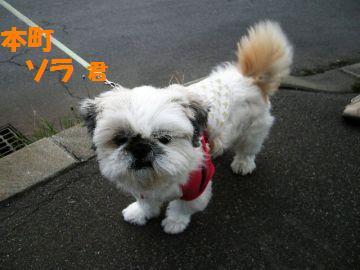 本町 ソラ 君 2008.10.14