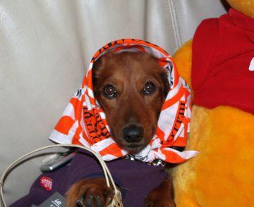 IMG_8599 Dog Days.愛犬ロミオ,2008.10.27 マッチ売りの会申し込み