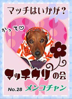 Dog Day 愛犬ロミオのわんだほ~2008.10.28マッチウリの会No.28