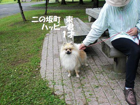 2009.7.16(木)二の坂東ハッピー君1歳