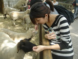 bronx zoo3