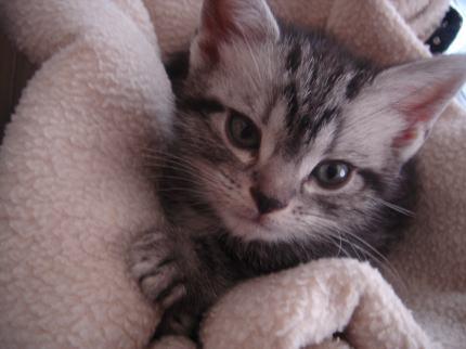 猫ベット2