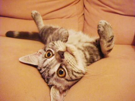 やんちゃネコ