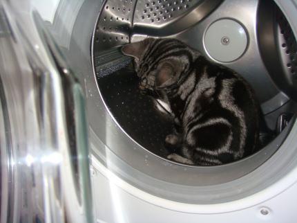洗濯機で遊ぶ