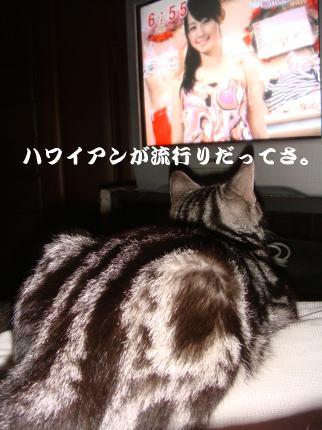 TVで待つ①