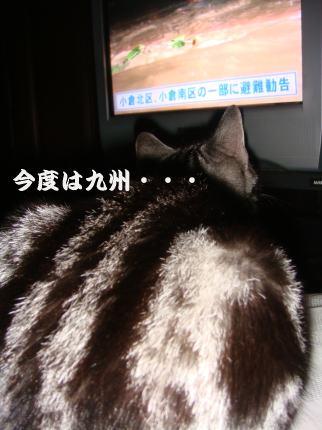 TVで待つ②