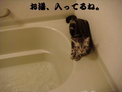お湯、入ってる