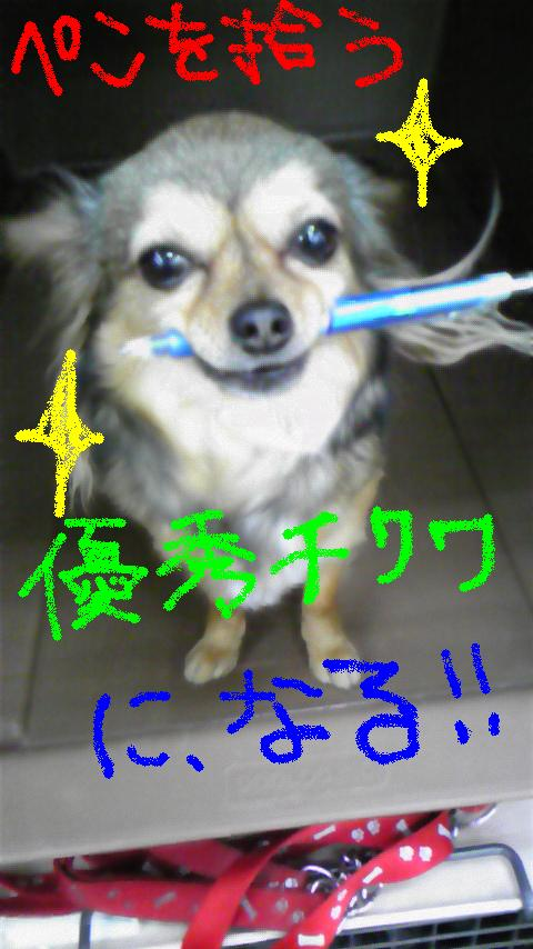 we love チワワ 2