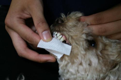 歯磨きン2