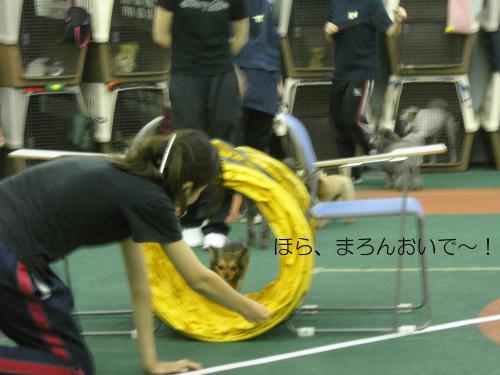 トレーニング 6