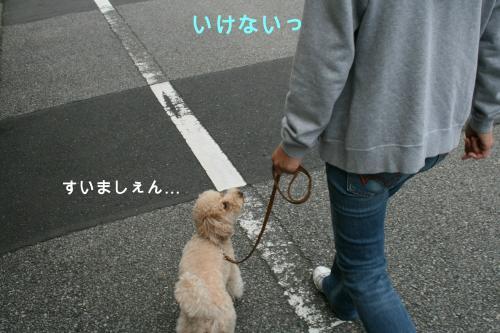 みるくお散歩 2