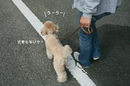 みるくお散歩 1