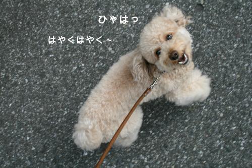 みるくお散歩 4