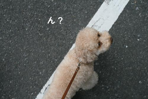 みるくお散歩 5