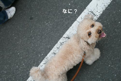 みるくお散歩 6」