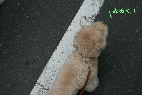 みるくお散歩 7