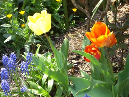 春の庭10