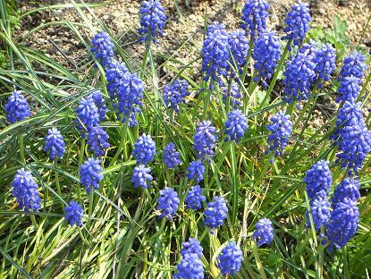 春の庭11
