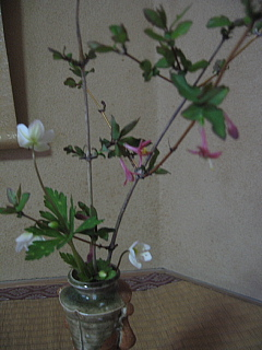 4,11お花