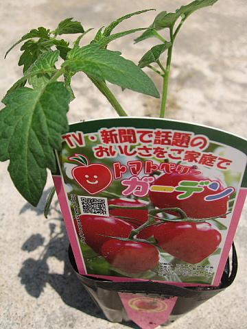 トマトベリー4,29