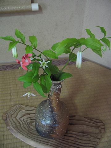 5,2お花