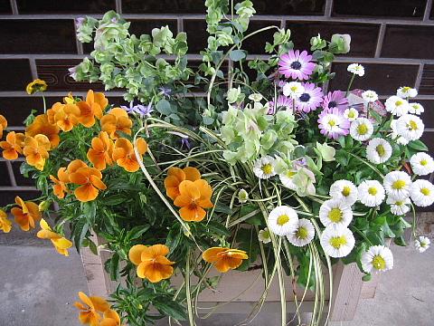 花オレガノ寄せ植え
