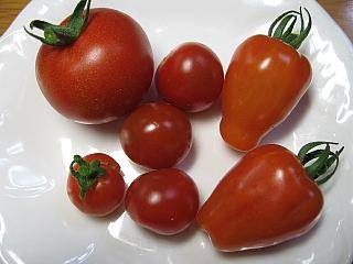 トマト収穫6,30
