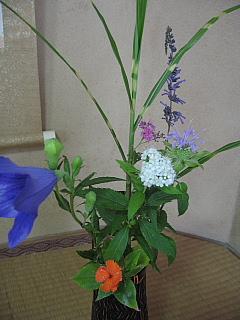 お花7,3conv0003
