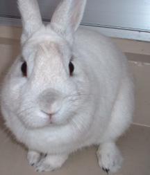 ウサギ うさぎ