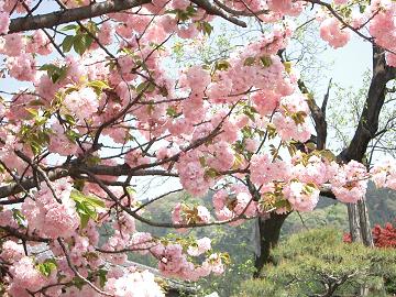 kamikawa_harumatsuri040418_002