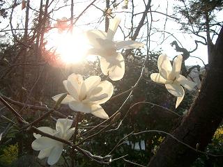 tenjinyama20050409_007