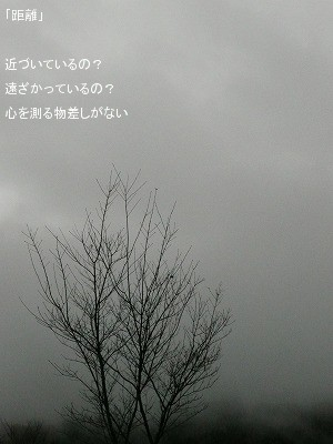 081203kyori.jpg