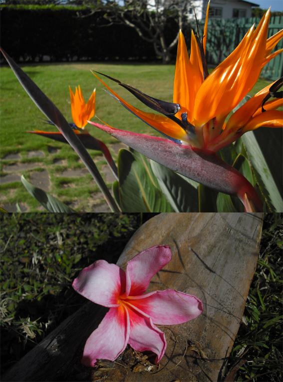 garden226.jpg