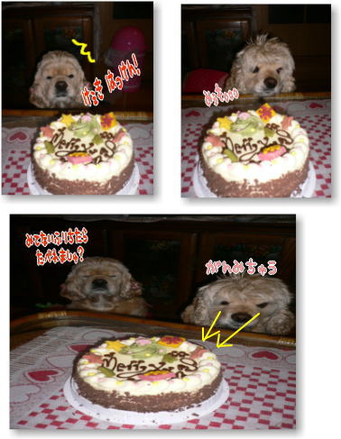 cake_20090102145110.jpg