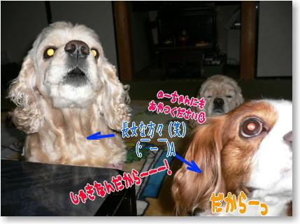 k10_20090322020858.jpg