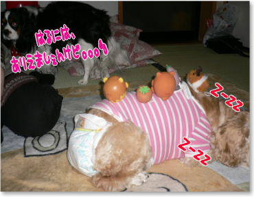 k9_20090322020851.jpg