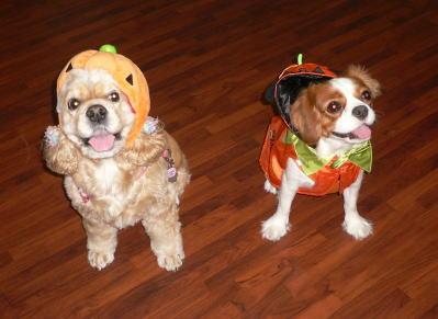 かぼちゃ と まぢょ