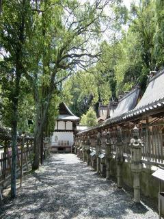 闘鶏神社(立ち絵)
