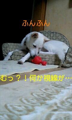 20061101214256.jpg
