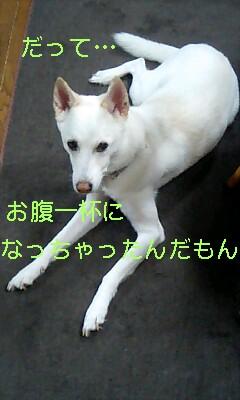 20061109203830.jpg