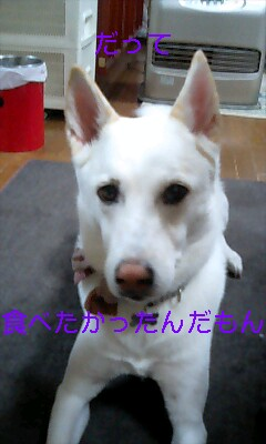 200611092038302.jpg