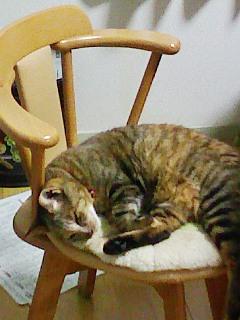 お気に入りの椅子で眠る