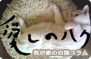 愛しのハク  by taso