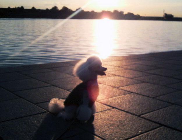 夕日を浴びるBLANC♪