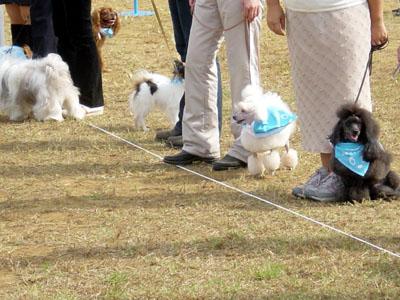 犬のおまわりさん運動会!