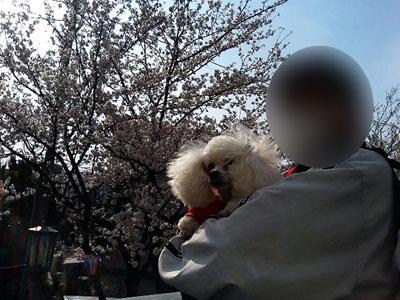 お花見NO2