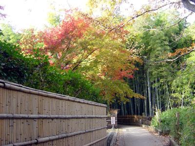 天竜寺北門前に広がる竹林の道