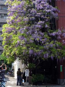 fujinohana014m.jpg